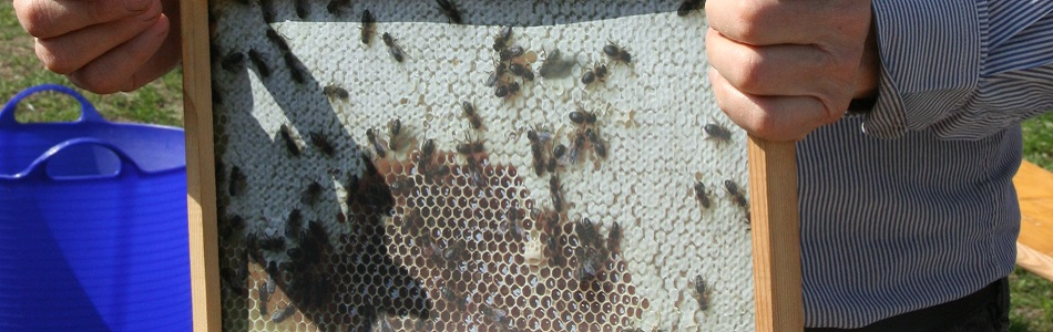 """Featured image for """"Unsere Bienen"""""""